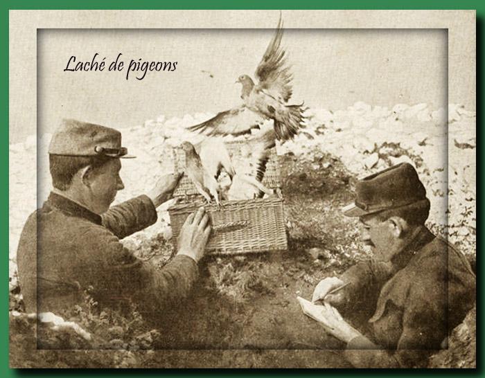 site to fr laché de pigeons